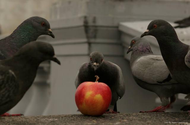 Просто хорошее фото птиц и животных 67347_m