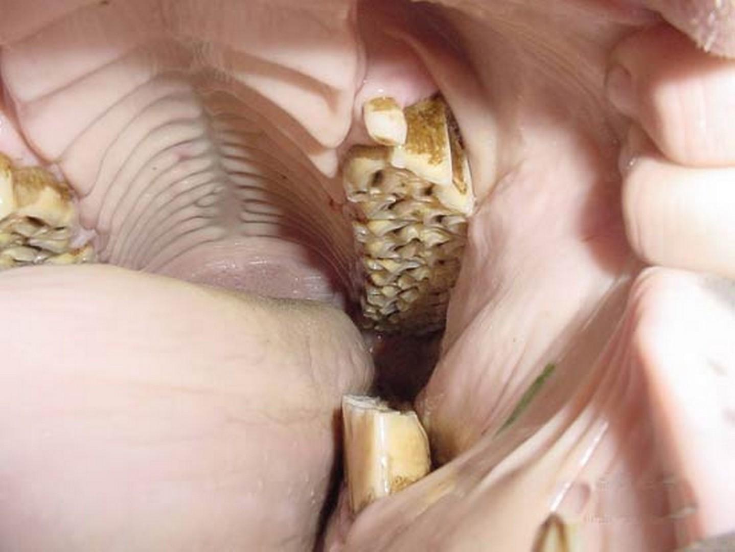 Предметы в анусе смотреть фото, Предметы в женском анусе (42 фото) 4 фотография