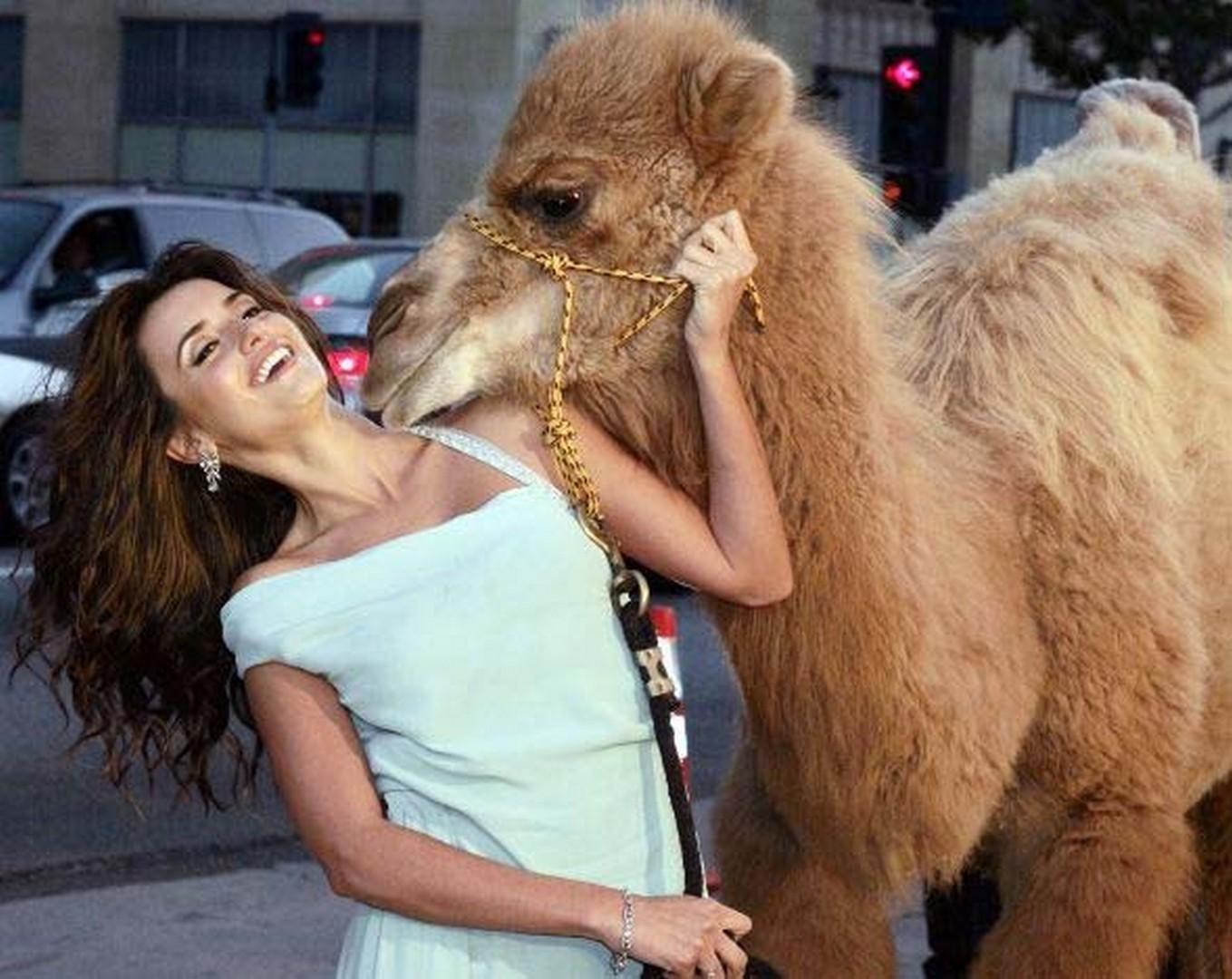 фото прикол верблюд