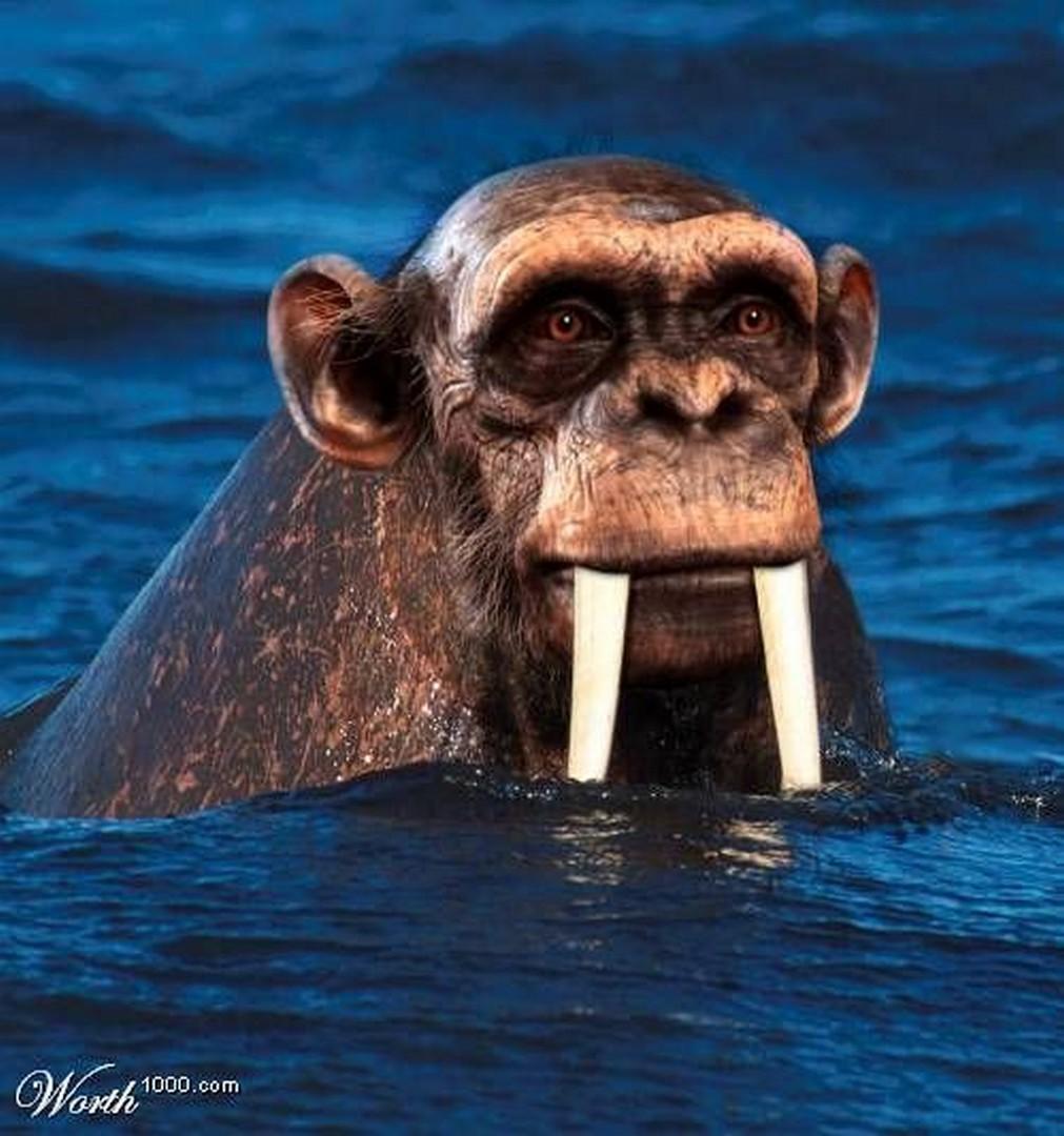 Хер моржовый фото 9 фотография