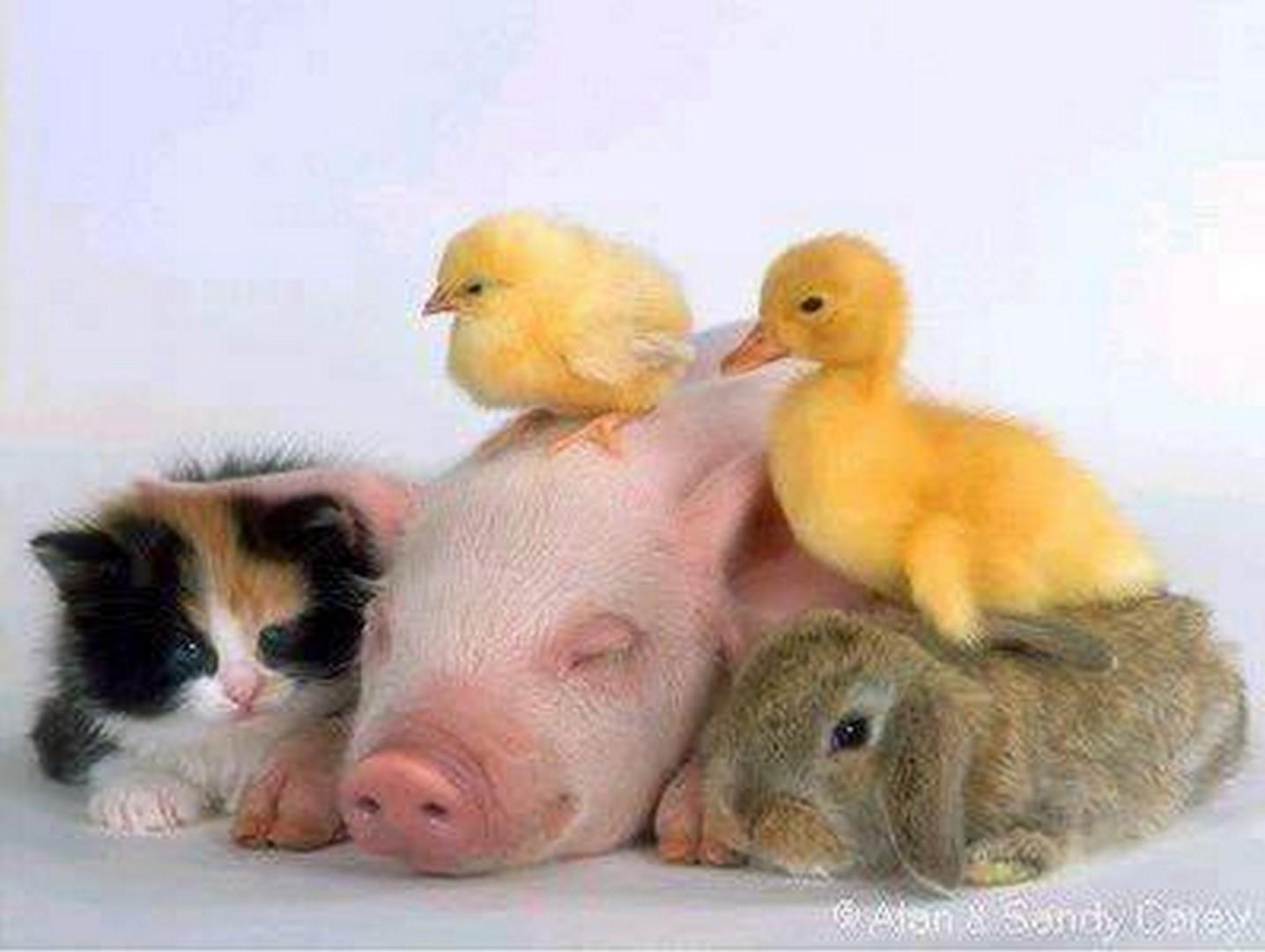 Фото приколы животных:
