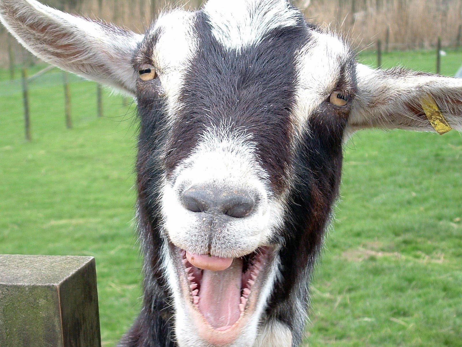 Трещина козы фото 12 фотография