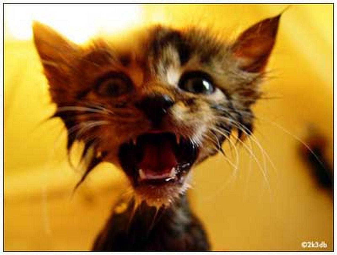 Фото мокрой котенка 9 фотография