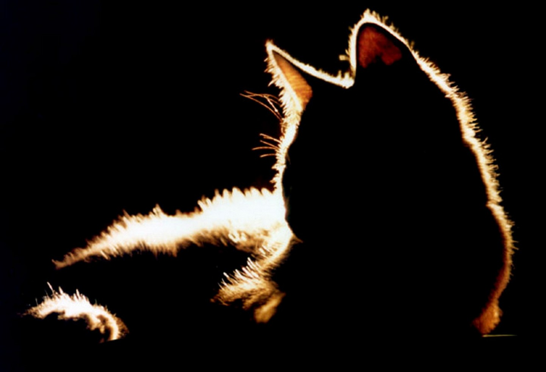 Хиторига одинокий мотылек смотреть онлайн 13 фотография