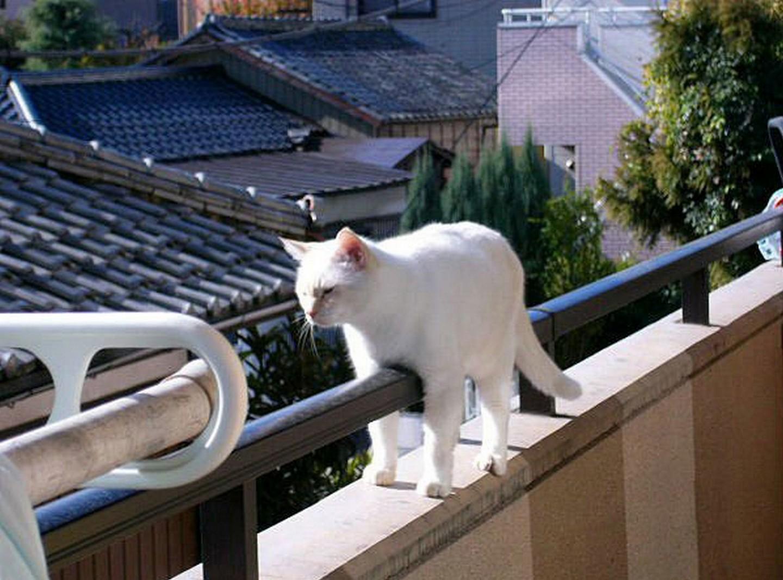 """""""монорельсовый кот"""" / прикольные кошки."""