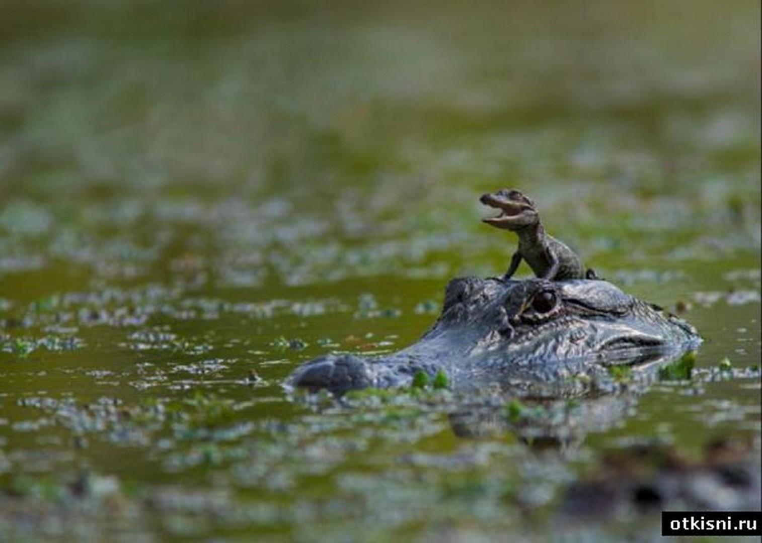 Рассказы с мамой на реке 6 фотография
