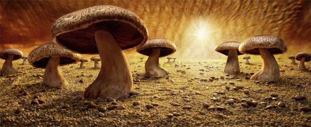http://images.vfl.ru/ii/1317137785/187b0973/125023_m.jpg
