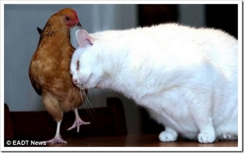 прикольные картинки с попугаями: