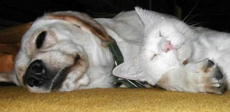Если во сне вы услышали рычание собак у себя за спиной, то в ваши интересы может вмешаться какой-то интриган.