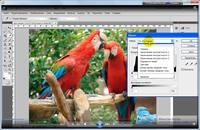 Мультимедийная школа Adobe Photoshop CS4 (Видеокурс-интенсив для новичков) [DVDRip/2010]