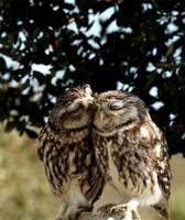 funny owls 15