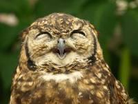 funny owls 02