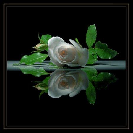 http://images.vfl.ru/ii/1322621588/493a8244/206498.jpg