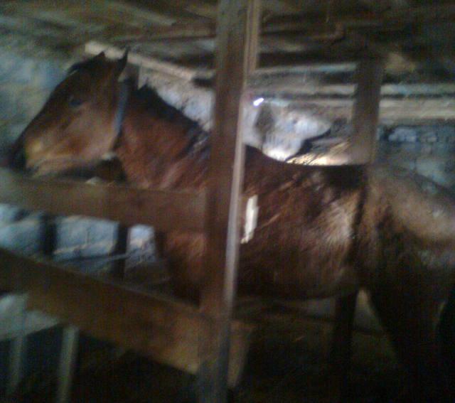 Лошади, Кони. 275975_m