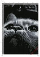 кот.page06