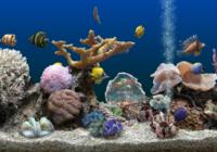 SereneScreen Marine Aquarium 3.2.6029 + Rus