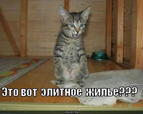 http://images.vfl.ru/ii/1331908333/2e3338f5/399521_m.jpg