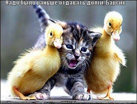 http://images.vfl.ru/ii/1331908333/5d82df63/399520_m.jpg