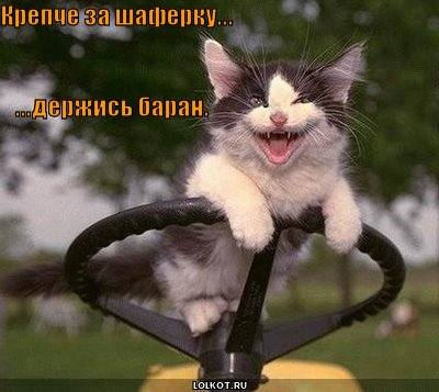 http://images.vfl.ru/ii/1331908333/eed892d5/399519_m.jpg