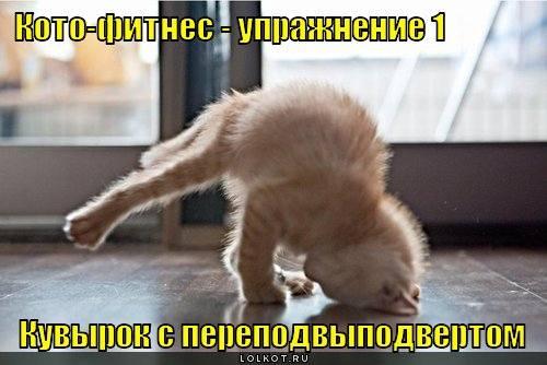http://images.vfl.ru/ii/1331908334/f42d9c91/399523_m.jpg