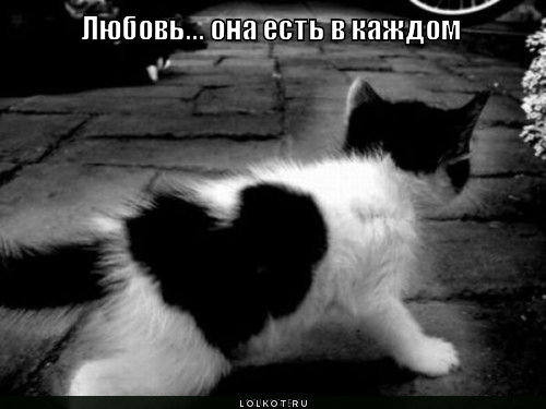 http://images.vfl.ru/ii/1331908335/9abac92b/399526_m.jpg