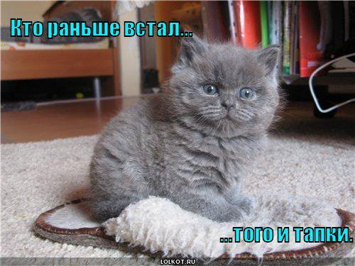 http://images.vfl.ru/ii/1332046329/706e5000/403757_m.jpg