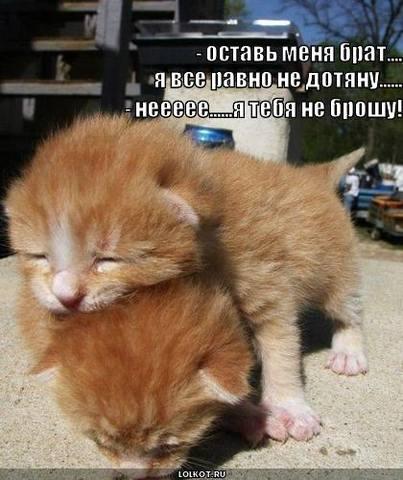 http://images.vfl.ru/ii/1332046329/ba60aac3/403752_m.jpg