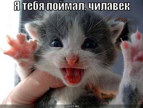http://images.vfl.ru/ii/1332046329/c4a97b47/403753_m.jpg