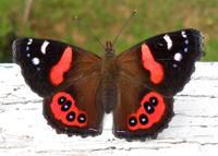 Цветок и бабочка 2