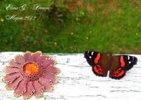 Цветок и бабочка 1