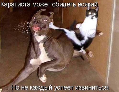 http://images.vfl.ru/ii/1333950978/0cf32f5d/455717_m.jpg