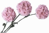 Вязаные цветы 473503_s