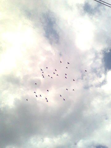 Фотосоревнование на количество голубей в небе. 480595_m