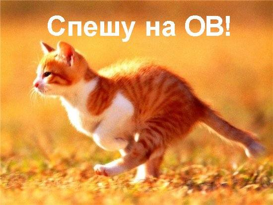 Кот спешит