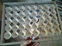 Как готовить варёно-мороженные креветки Подскажем 56