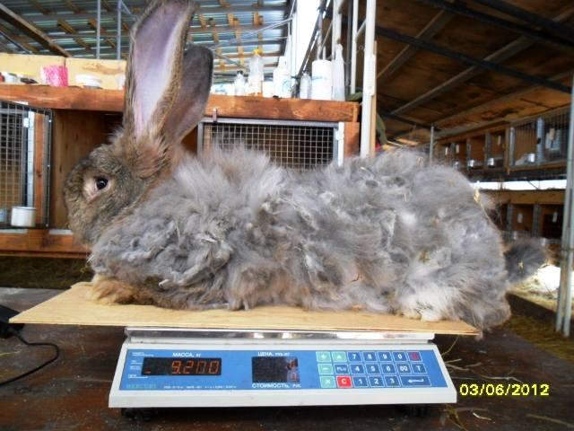 Флудильня о кроликах - Страница 4 594966_m