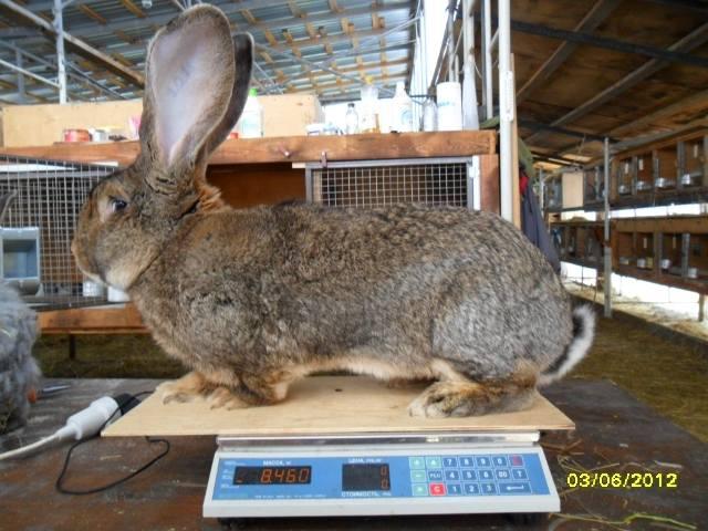 Флудильня о кроликах - Страница 4 594965_m