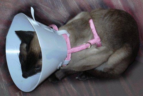 Защитный воротник своими руками для кошки