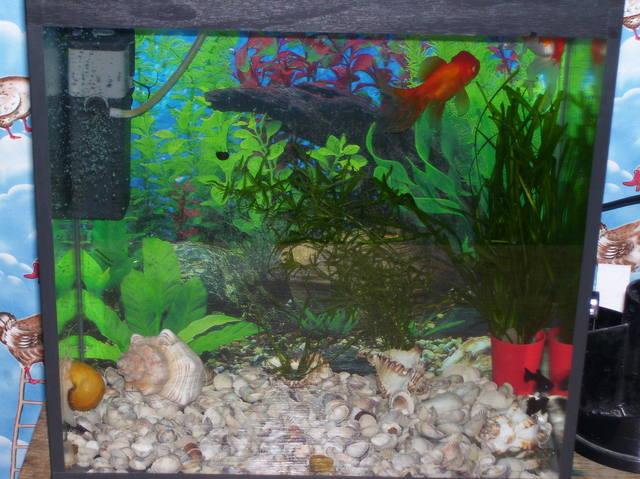 30 литровый аквариум