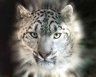 http://images.vfl.ru/ii/1342986899/5d272efc/752029_m.jpg
