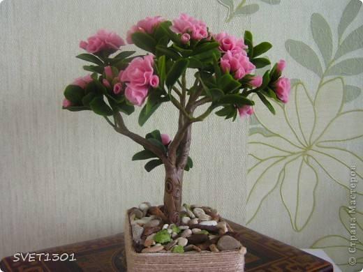 http://images.vfl.ru/ii/1343110687/50678c84/756005_m.jpg