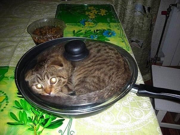 кошак в сковороде