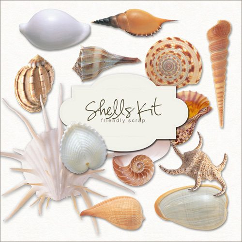 Scrap kit - Sea Shells