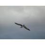 045 Чайка над набережной Алушты