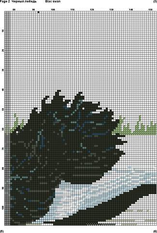 черный лебедь(1)