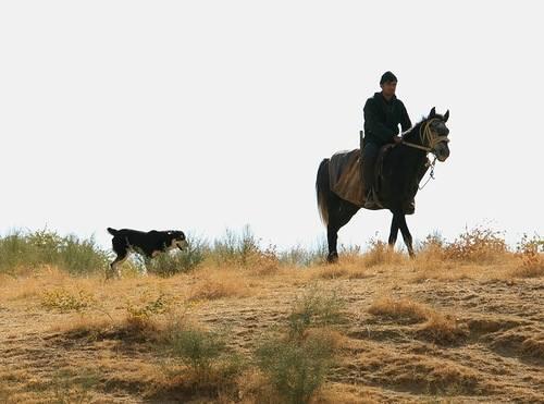 Аборигенные собаки СА и KZ 1098224_m