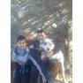 Папа сын и собака
