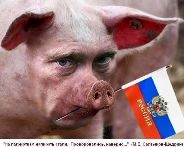 Вирус африканской чумы свиней снова обнаружили на Черниговщине - Цензор.НЕТ 5840