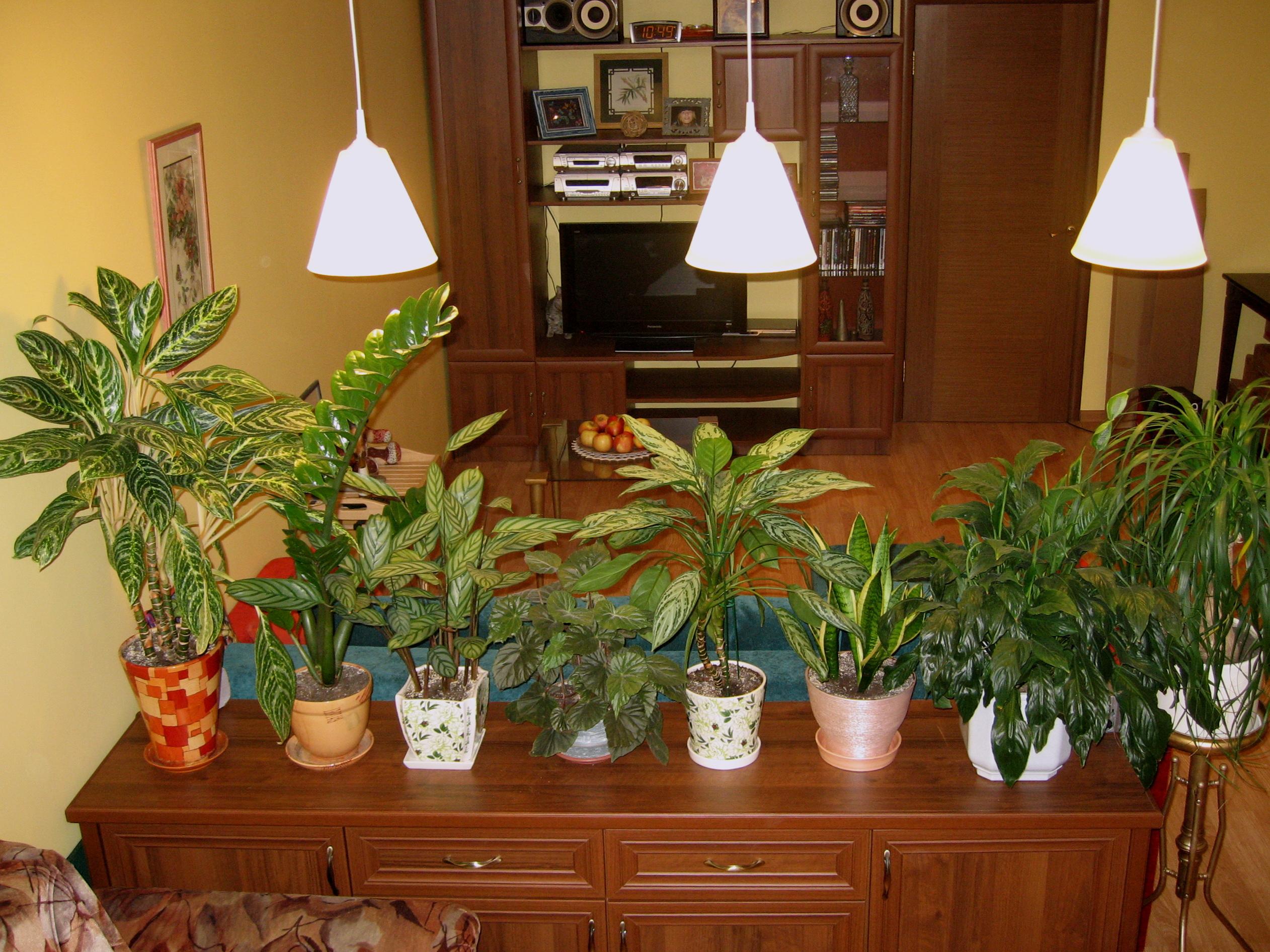 Полезные цветы для квартиры фото