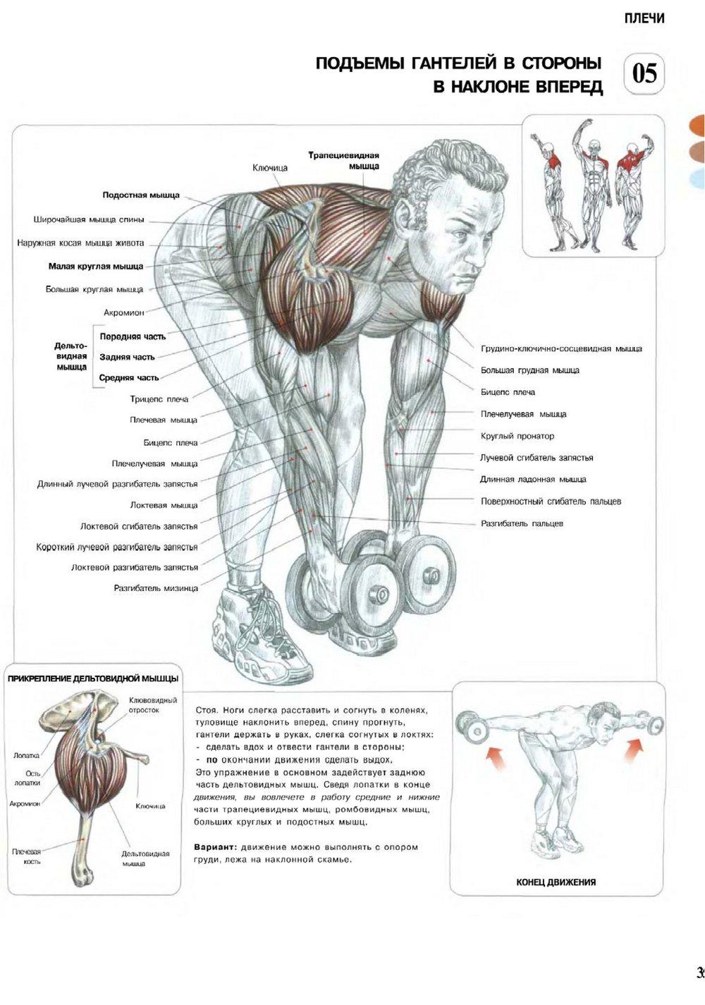 Анатомия бодибилдинга скачать pdf